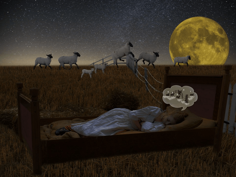 A young girl counting sheep in her sleep