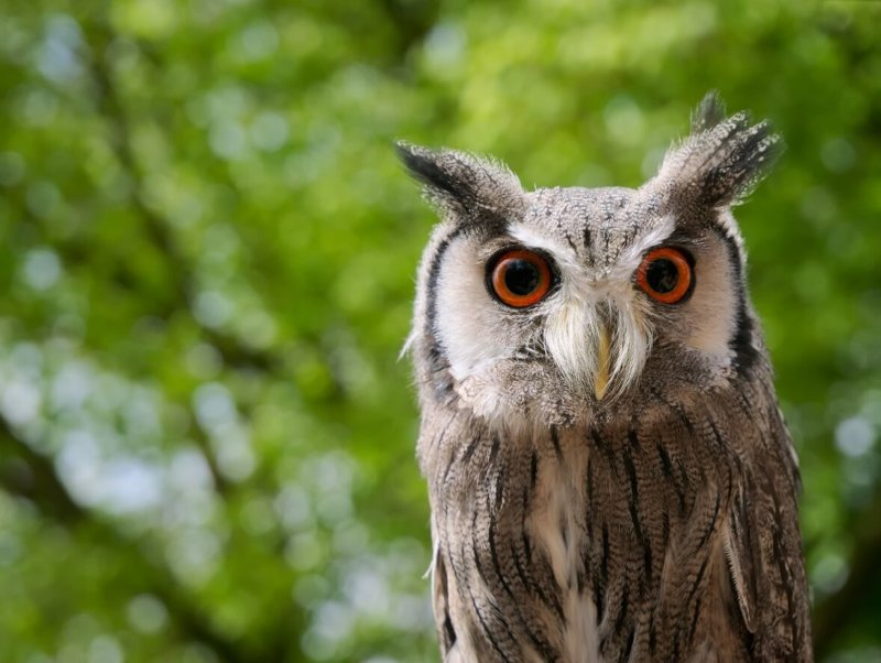 The Night Owl chronotype
