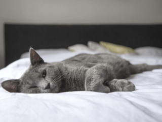 Should Pets be Allowed to Sleep on Your Bed cat on bed