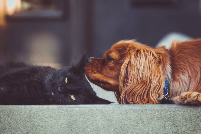 A black cat being sniffed by a dog