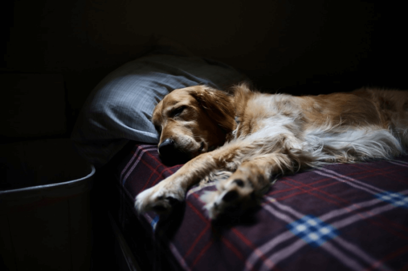 A dog sleeping on a bed