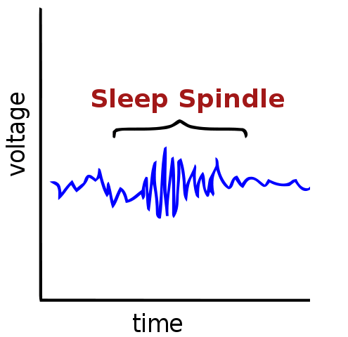 sleep spindle visualization