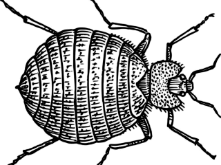 Everything you need to know about bedbugs featured image